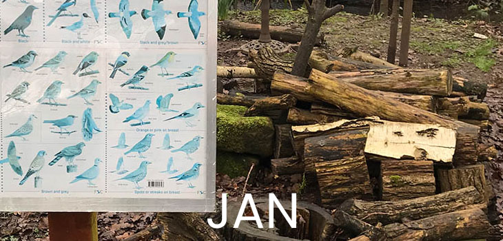 January features illustrations of birds that have been bleached blue by the sun