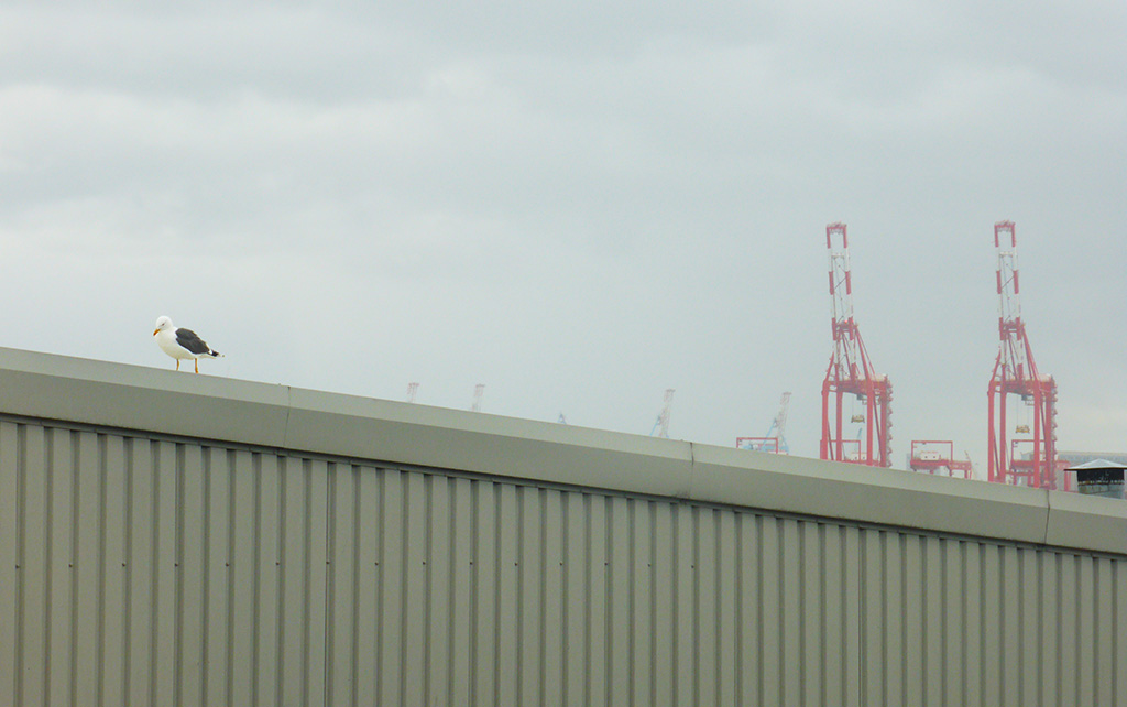 A seagull on the corrugated roof of a bowling alley, with two red shipping cranes in the background