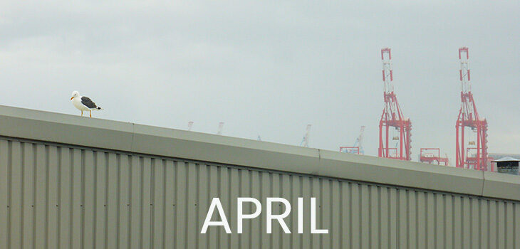April - a seagull on the roof of the bowling alley, two red shipping cranes in the background